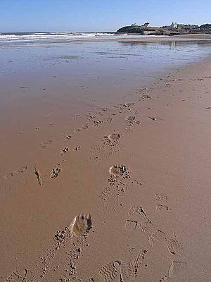... to leave my footprints nandinimitra2013 wordpress com footprints in
