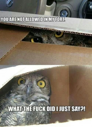 Owls.box.hilarious quotes.funny.