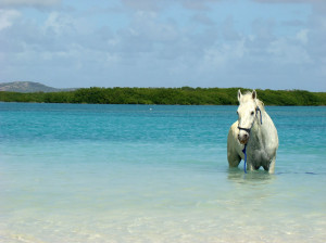 """Sea horse at Lac Bay – Bonaire, Netherlands. """"There is something ..."""
