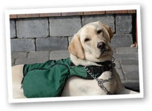 Meet the dogs of Autism Service Dogs of America