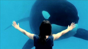 funny killer whale video