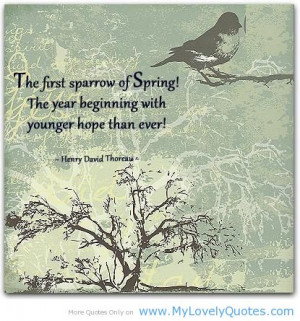 The first sparrow of spring! -happy birds spring