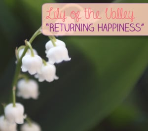 Lily of the Valley:
