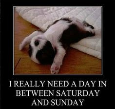 need a day funny quotes cute weekend funny quote funny quotes days of ...