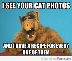 See Your Cat Photos...