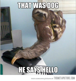 Funny photos funny sloth talking phone