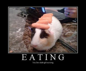 ... cute pig carrot fail wrong pretty guinea eat cute carrot pig fail