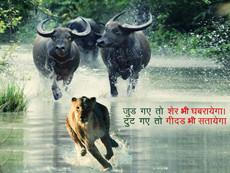Hindi Quotes wallpapers