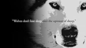 Wolves don't lose sleep.[1920x1080][OC]