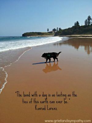 Dog Quotes Loss Of Pet Dog card.