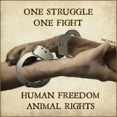 stop animal cruelty more animal compass human freedomanim animal right ...