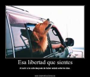 Great site for Spanish vocab and resources. Funny pictures and sayings