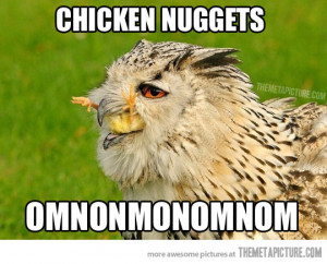 Funny photos funny hawk eating chicken