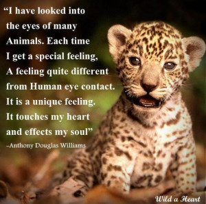 Be kind to animals: they are the beauties of our cold and ugly world ...
