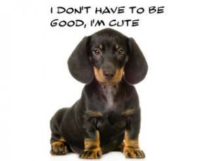 10 Pros & Cons Of Owning A Dachshund