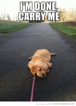 dog lying down path animal leash tired carry me funny pics pictures ...