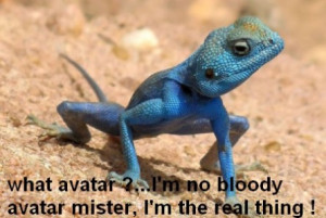 Funny Pictures Lizards on Funny Lizard Picture Funny Pics Co