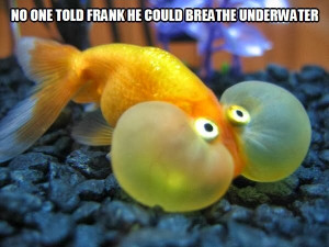 30 Funny animal captions - part 17 (30 pics), funny caption, animal ...