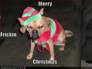 Christmas Puppies!!