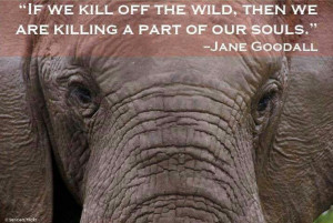 Jane Goodall, so wise……….