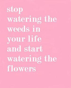 Stop watering weeds Quote
