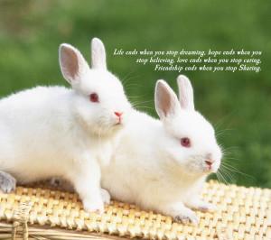 Quote,rabbit,rabbits,bunny,bunnies,cute