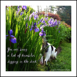 Tag Archives: digging-cats-garden-irises-photo quote de jour