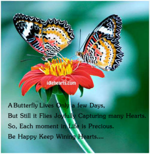 Butterfly Lives Only a few Days, But Still it Flies Joyfully ...