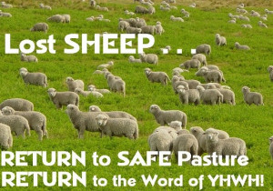 Lost Sheep...