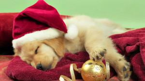 Christmas Dog Wallpapers