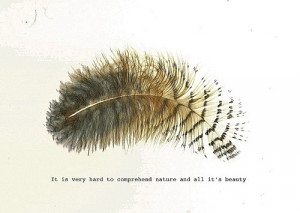 feather nature quote