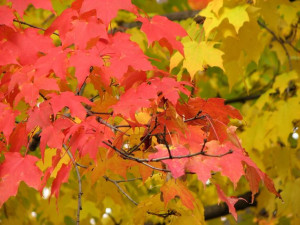 Fall Quotes: 14 Inspirational Autumn Sayings #diamondcandles # ...