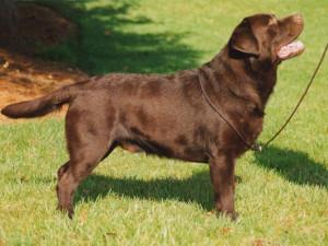 Pies - rasy, dbanie, tresura, pielęgnacja i wychowanie