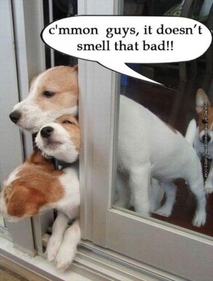 funny picture it doesnt smell that bad farting dog