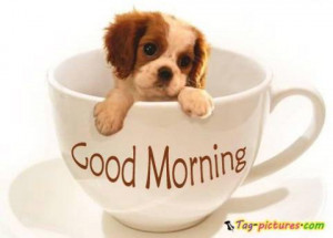 good morning cup dog pictures - Newest pictures