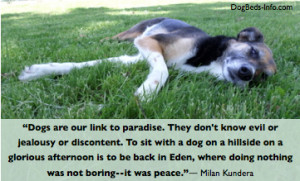 Dog Quotes: Dogs Are Our Links to Paradise…