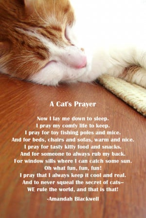 Cat Grieving Quotes