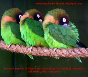 Beautiful Birds Wallpapers with Inspiration Quotes - Part 2
