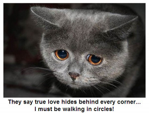 ... sad eyes… maybe it is walking in circles, as cats are known for