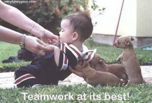 Funny Animal Teamwork Pictures Funny animal t... teamwork