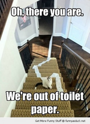 cat stairs lolcat animal toilet paper funny pics pictures pic picture ...