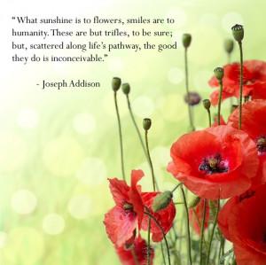 Happiness #quote #smiles #poppy