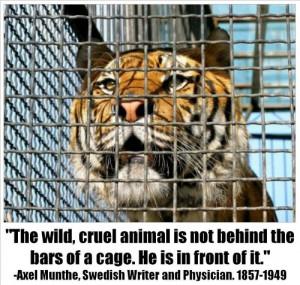Animals in captivity – cruelty toward animals