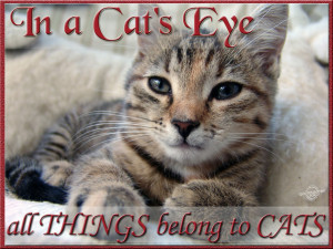 Cat Quotes Graphics, Pictures - Page 2