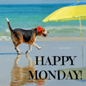 ... , Funny Quotes, Beach Baby, Summer Heat, Dogs Mondays, Myrtle Beach