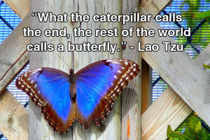What the caterpillar calls the end, the rest of the world calls a ...