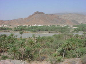Nizwa Desert Oasis Seen From The Top Of Forts Tower In Oman