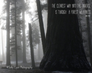 ... with John Muir Quote, Sequoia National Park, Surreal, 8x10 or 11x14