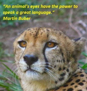 Famous quotes about animals 5