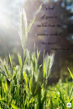 Wandering Wisdom Wednesday]